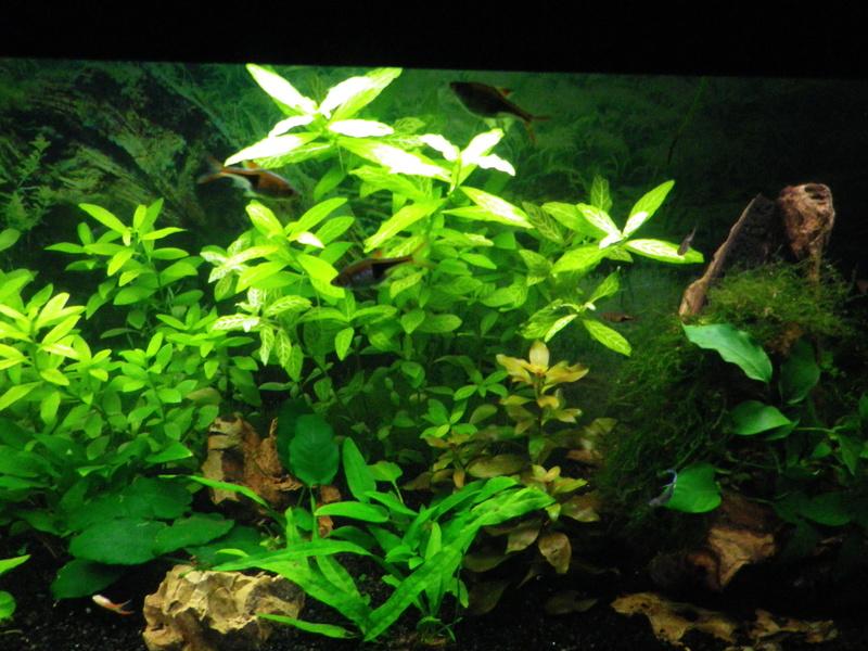 besoin de votre aide pour mon aquarium de 130 l - Page 5 Imgp0030