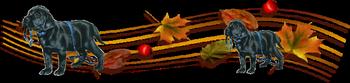 Les bonjours et contacts journaliers du Mois de Novembre 2017 13_11_10