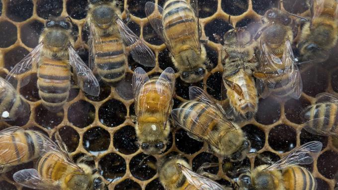La production de miel français à l'arrêt Xvm54d10