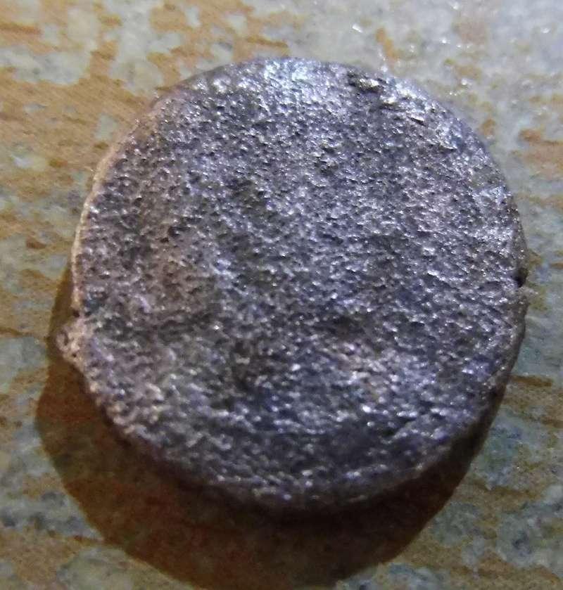 Petite romaine P1030111