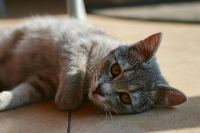 Miss TIGRIS - chat femelle, née en octobre 2017 - en FA chez Abysse (92) - Adoptée par Anne (Belgique) - !! EN FUGUE HELP !! Img_4310