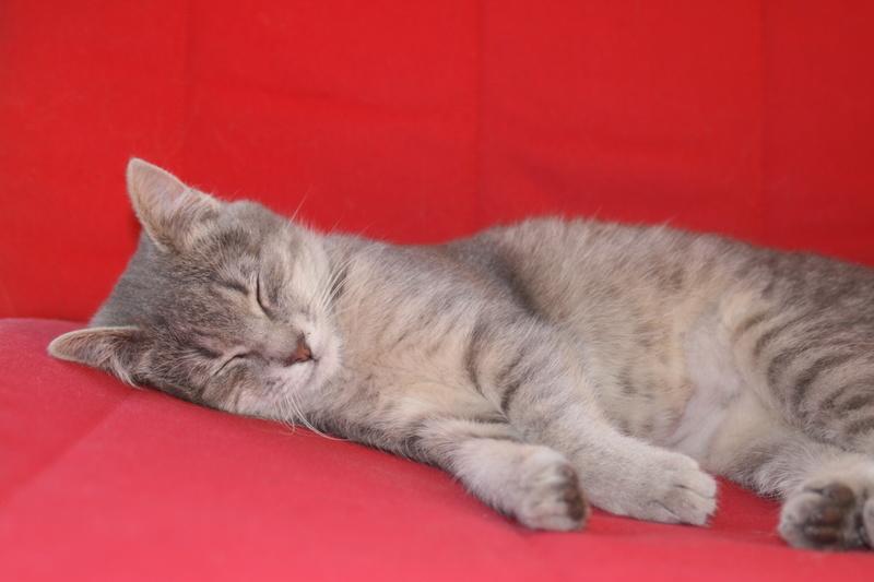 Miss TIGRIS - chat femelle, née en octobre 2017 - en FA chez Abysse (92) - Adoptée par Anne (Belgique) - !! EN FUGUE HELP !! Img_4311