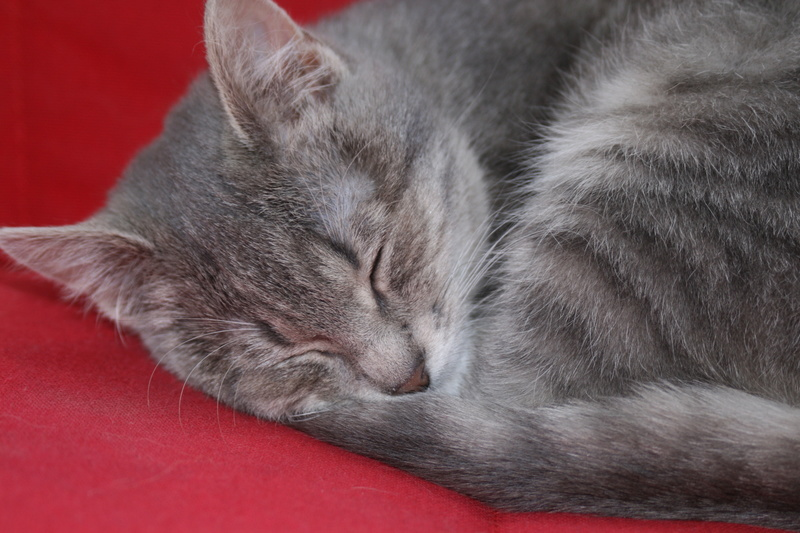 Miss TIGRIS - chat femelle, née en octobre 2017 - en FA chez Abysse (92) - Adoptée par Anne (Belgique) - !! EN FUGUE HELP !! Img_4312