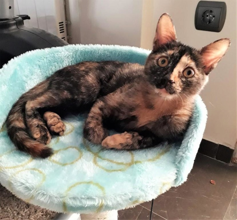 Κιάρα - ιδιαίτερο γατάκι ψάχνει σπίτι Kiara-15