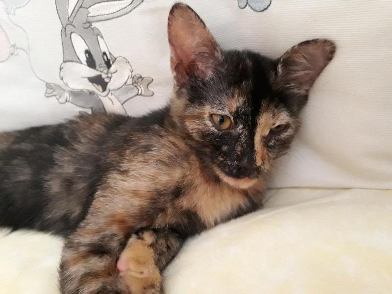 Κιάρα - ιδιαίτερο γατάκι ψάχνει σπίτι Kiara-16