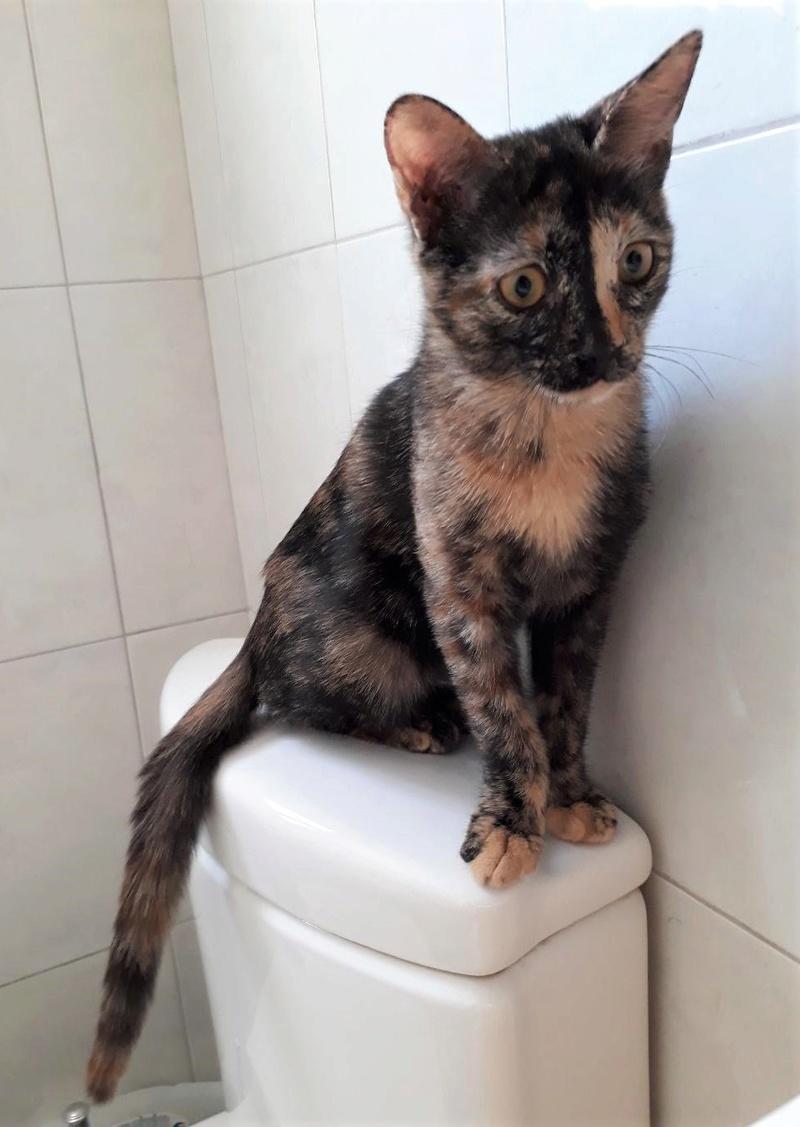 Κιάρα - ιδιαίτερο γατάκι ψάχνει σπίτι Thumbn11