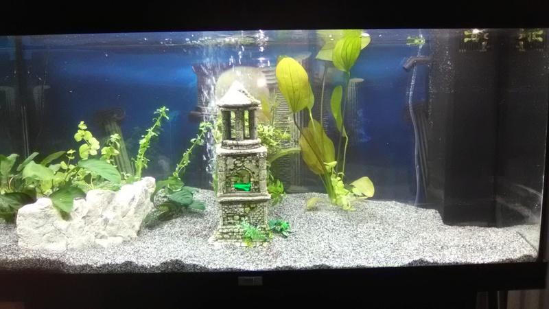 Mon nouvel Aquarium Img_2010