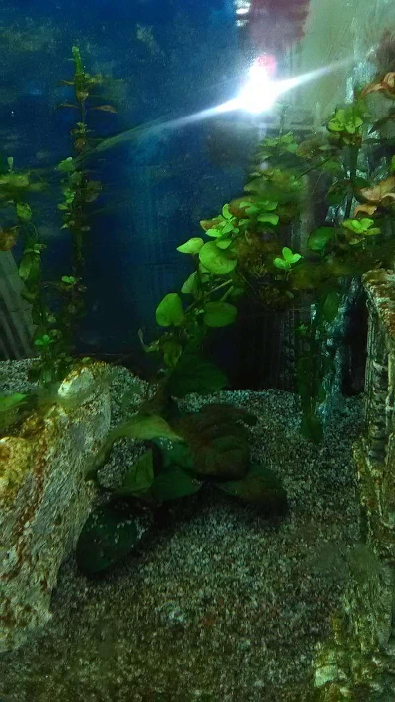 Mon nouvel Aquarium Img_2011