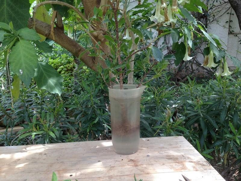 Ficus Retusa - Página 3 Img_7144
