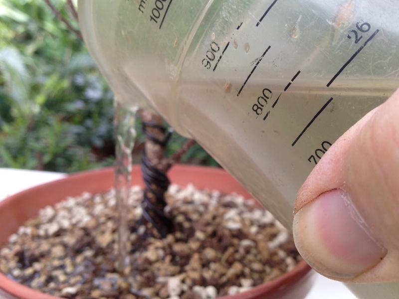 Ficus Retusa - Página 3 Img_7153