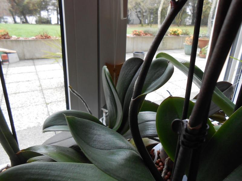 hampe florale 6_201812