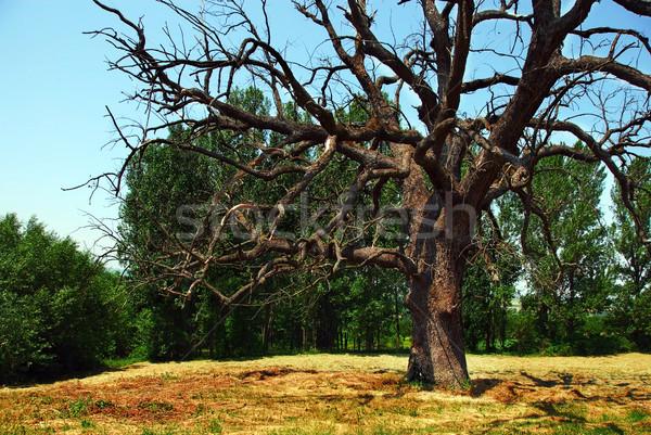 Использование сухого дерева в магии 1313