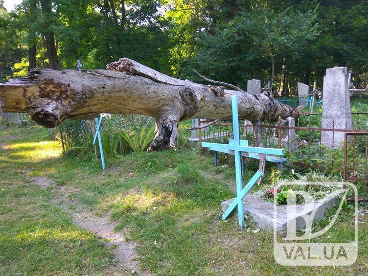 Использование сухого дерева в магии 1318