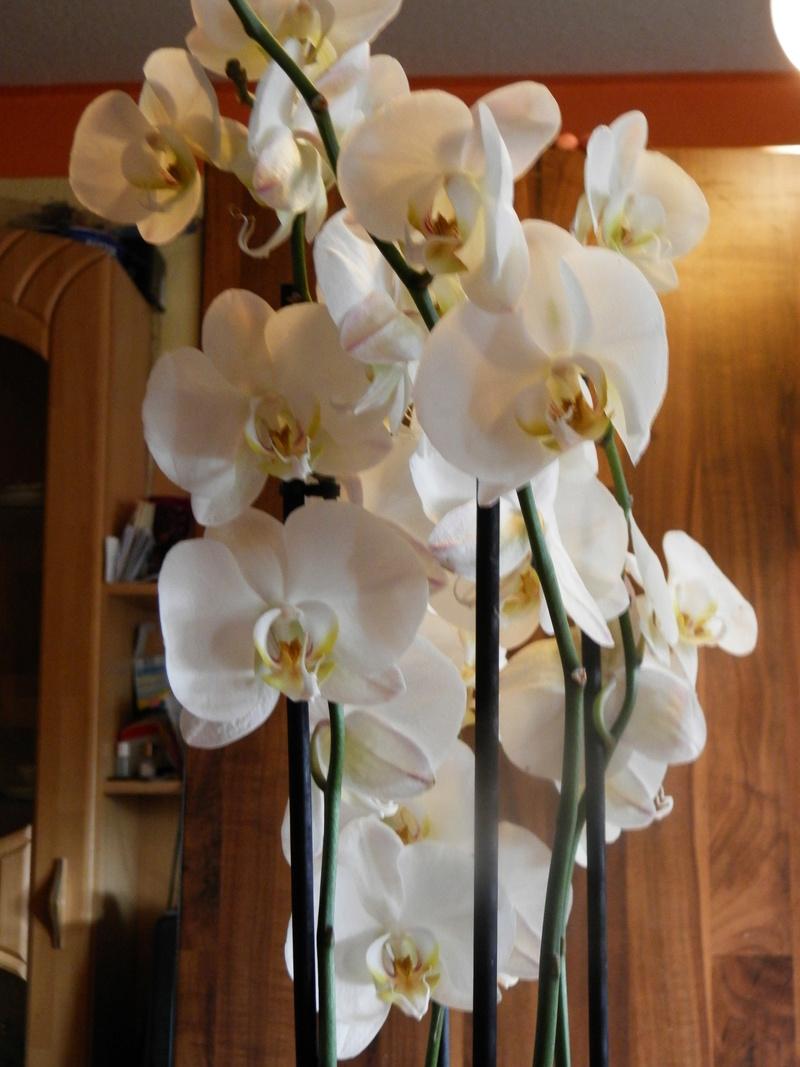 Jörg´s kleine Orchideen Welt Orchid12