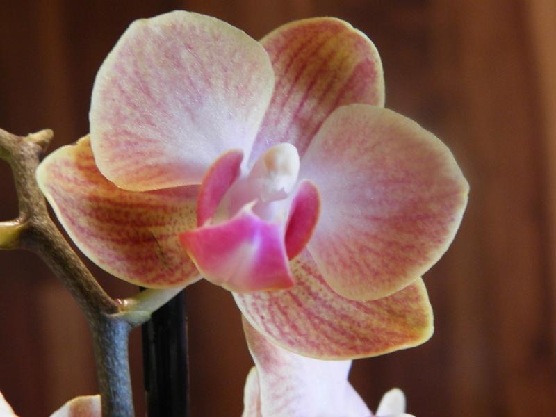 Jörg´s kleine Orchideen Welt Orchid15