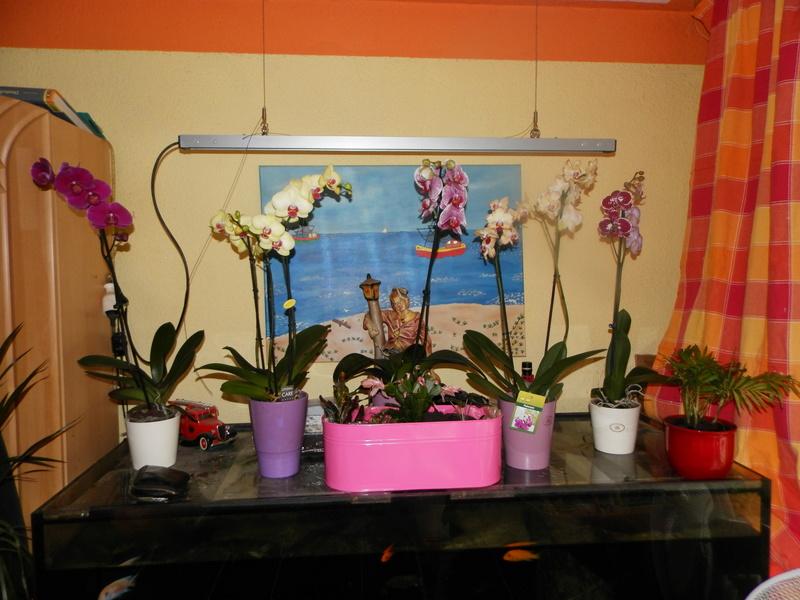 Jörg´s kleine Orchideen Welt Orchid16