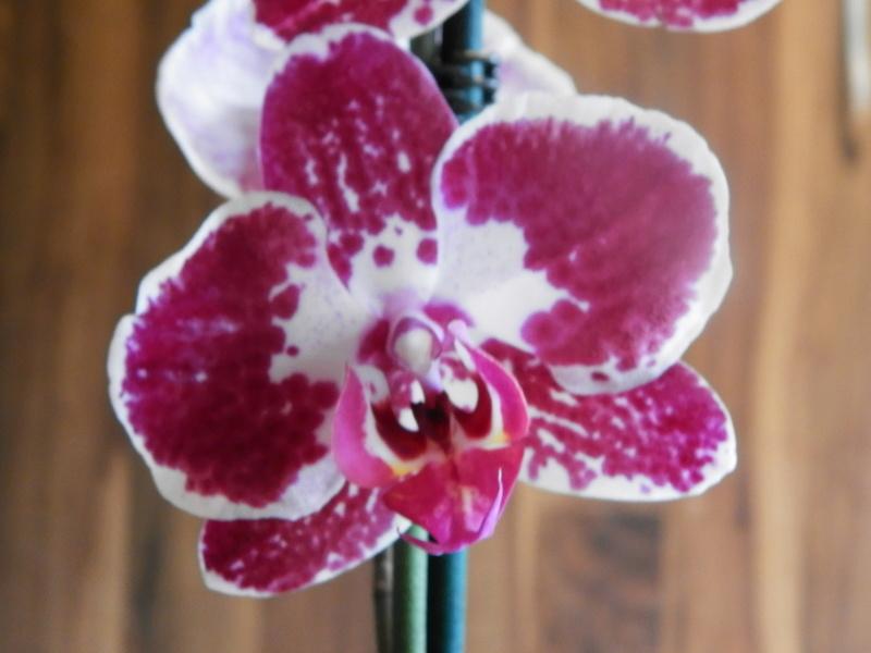 Jörg´s kleine Orchideen Welt Orchid19