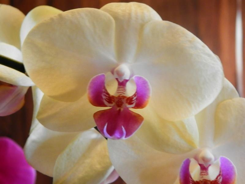 Jörg´s kleine Orchideen Welt Orchid21
