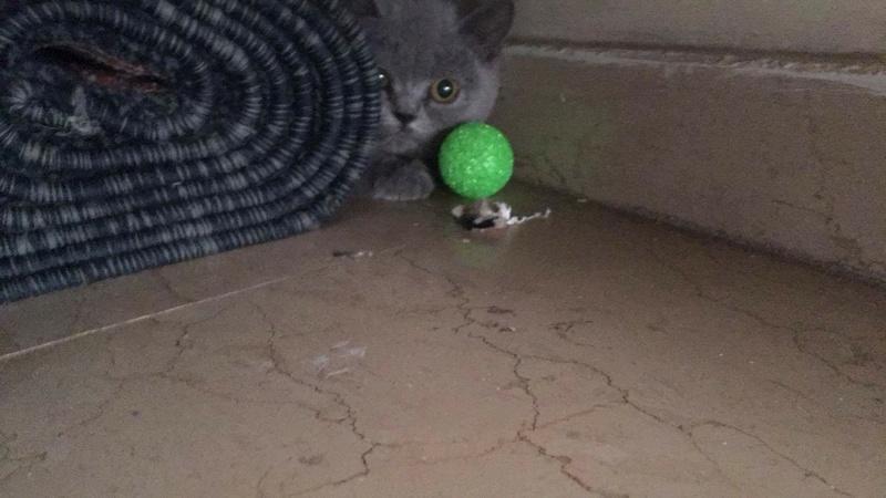 Άγριο γατάκι 22467312