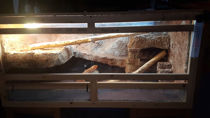 Nettoyage terrarium  15080710