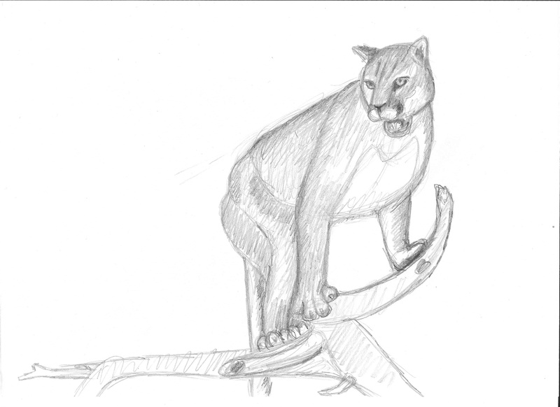 Croquis postures - Page 2 Puma_d10