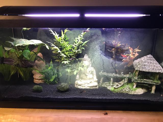 Algues, aquarium instable Img_1110