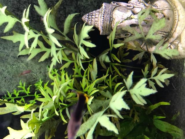Algues, aquarium instable Img_1113