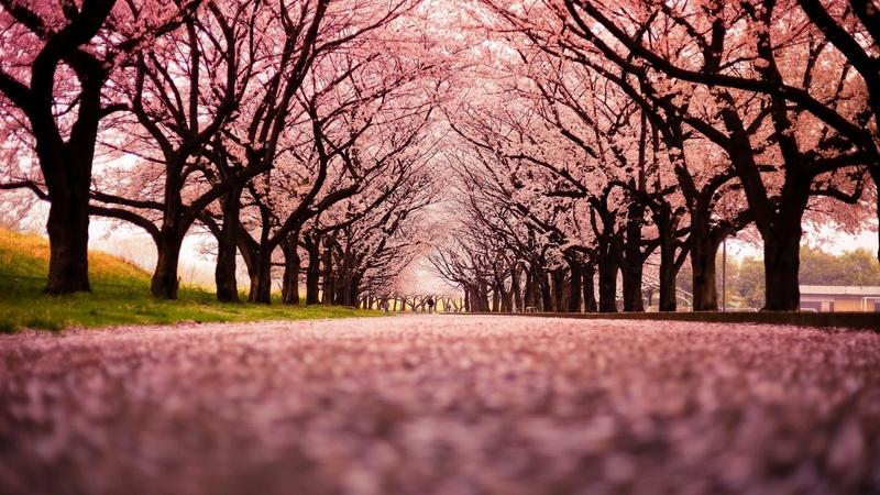 Domaine des Cerisiers