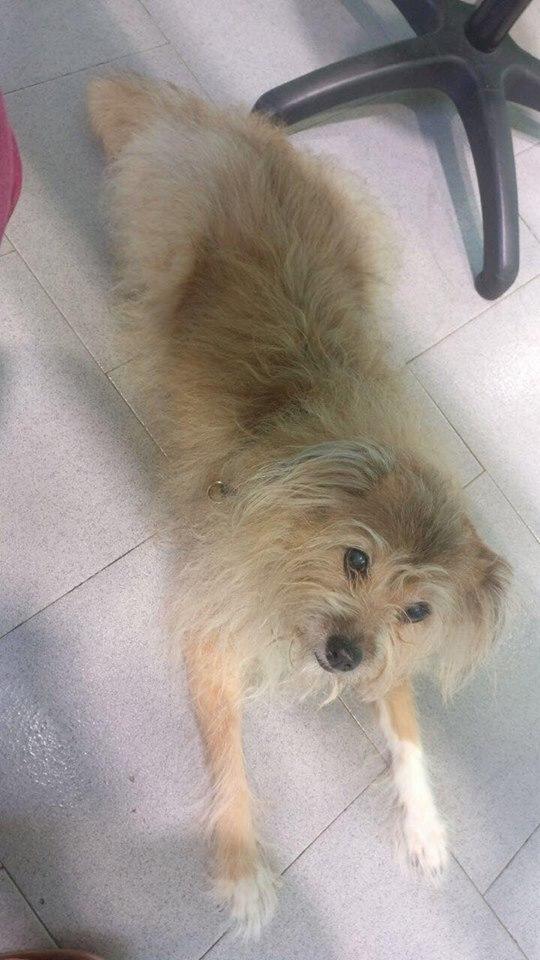 Family euthanized my dog without telling me 22657410