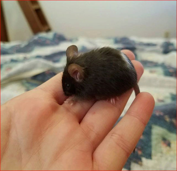 Help Me Name My Mouse! (PLEASE SUGGEST IDEAS!)  Mousey10