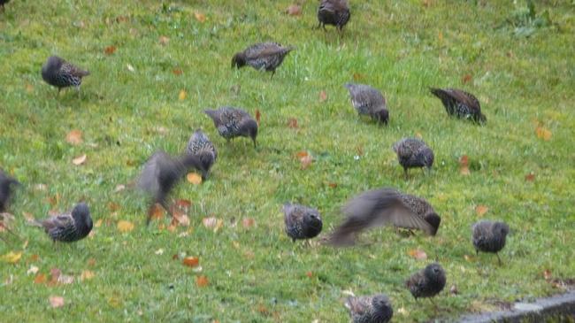 Les oiseaux 20010