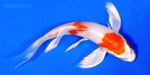 Mon aquarium 9_hari10