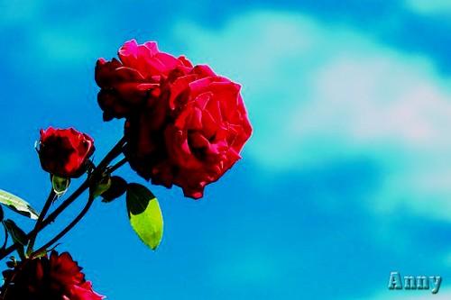 """N° 35 PFS """"Reglages / Niveaux Tons Sombre  / Clair / Moyen """" Rose-111"""