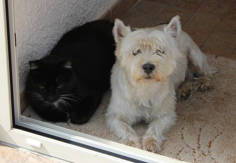 Photos et vidéos de vos animaux ! Img_0510