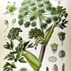 Herbolario Angyli10