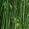 Herbolario Bamboo10