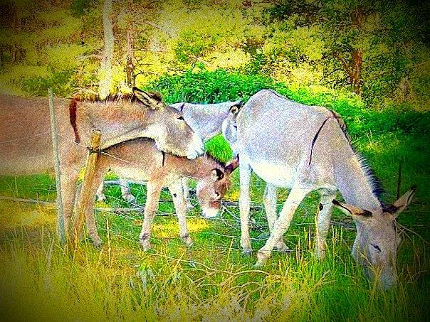 Un petit âne gris 19138910