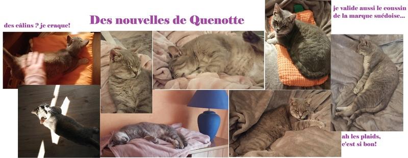 quenotte - QUENOTTE FIV+ 20171011