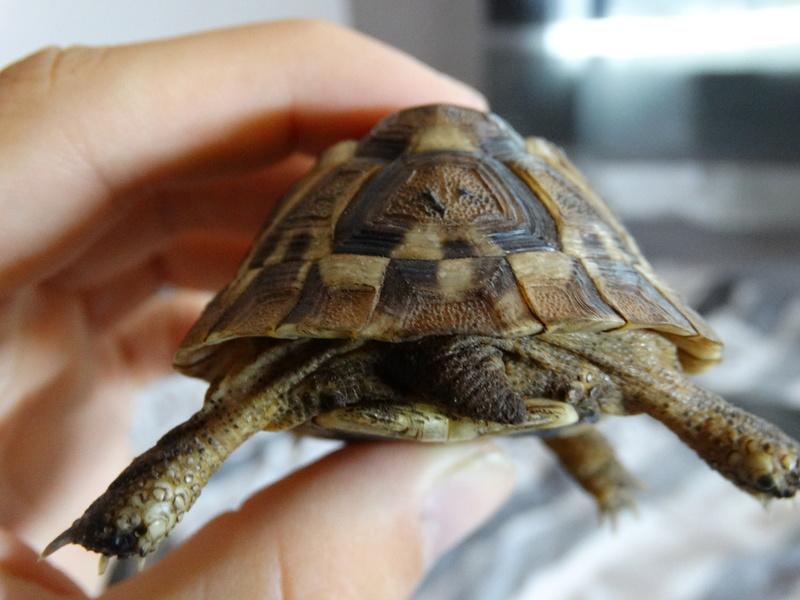 Identification de mes tortues et conseils sur la maintenance  Dsc02018