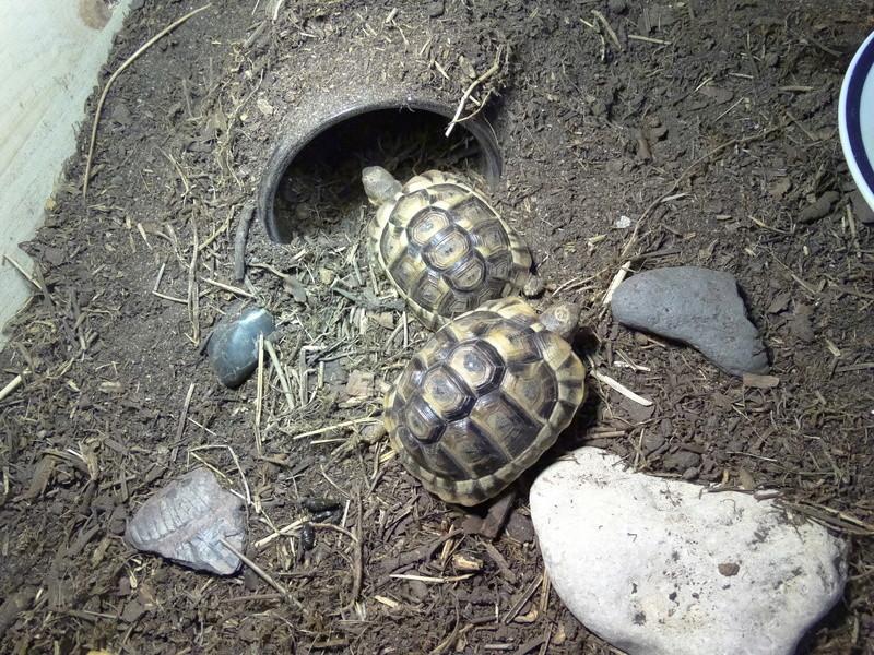 Identification de mes tortues et conseils sur la maintenance  Dsc02026