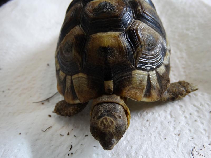 Identification de mes tortues et conseils sur la maintenance  Dsc02027
