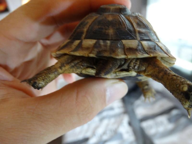 Identification de mes tortues et conseils sur la maintenance  Dsc02028