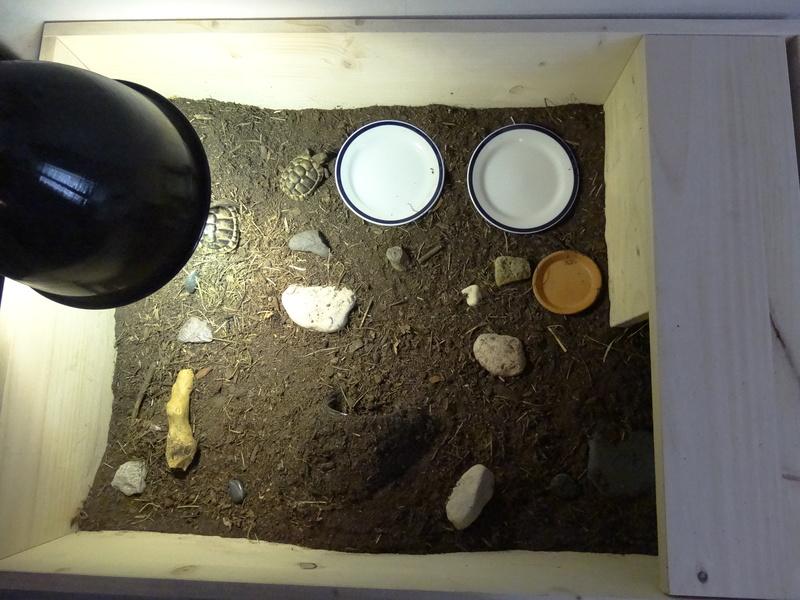 Identification de mes tortues et conseils sur la maintenance  Dsc02030