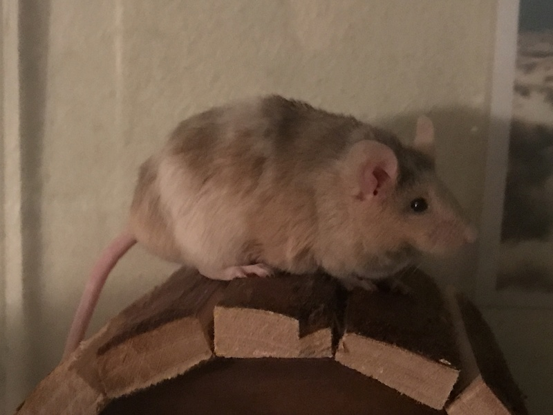 Will my mice be okay? Img_2110