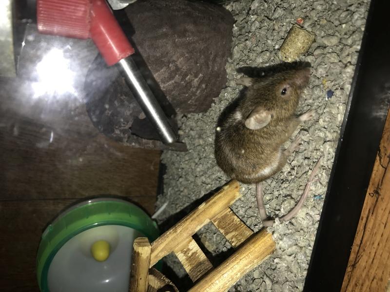 Will my mice be okay? Img_7210