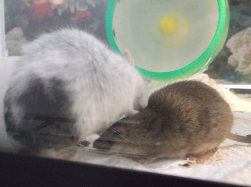 Does my mouse need a friend?? 12_22_10