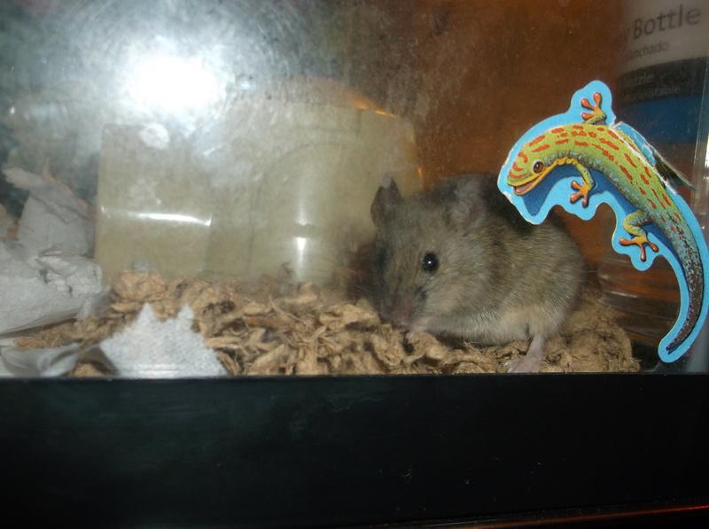 The Mice I've Had 12_22_15