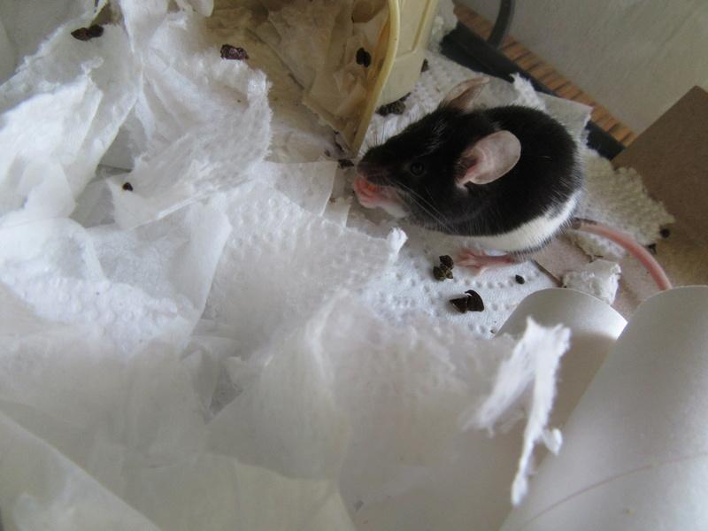 Meet My Mice 3_15-210