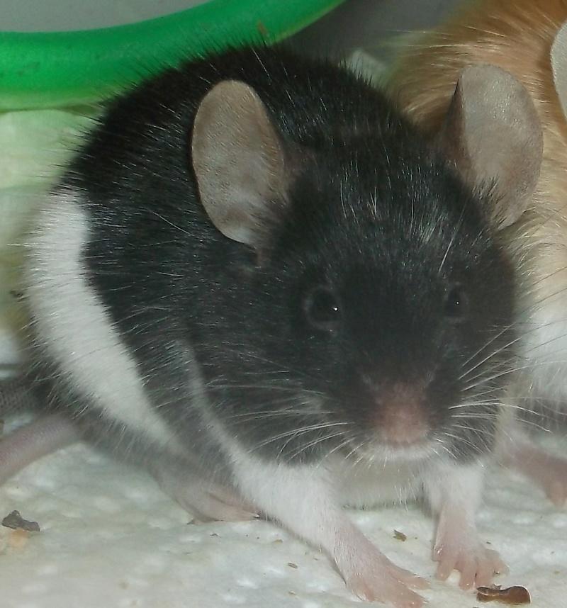 Meet My Mice 3_15_210