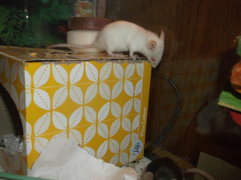 The Mice I've Had 3_8_2010